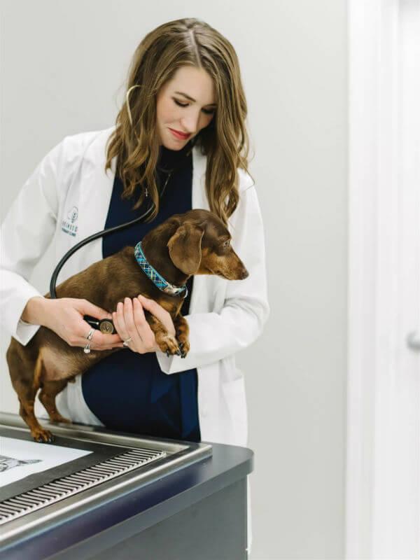 veterinarian prospect ky